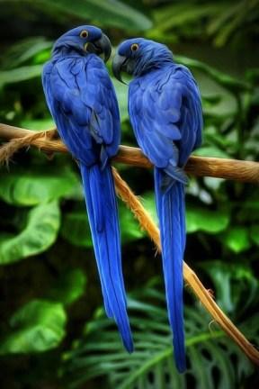 blue parrort phone backgrounds wallaper