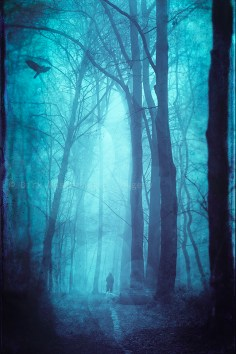 morning forest mist phone backgrounds wallaper
