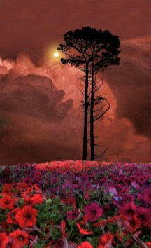 phone backgrounds evening sunset