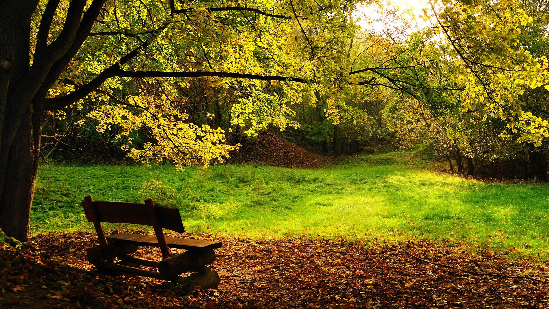 Nature Wallpaper Gree Grass and Bench