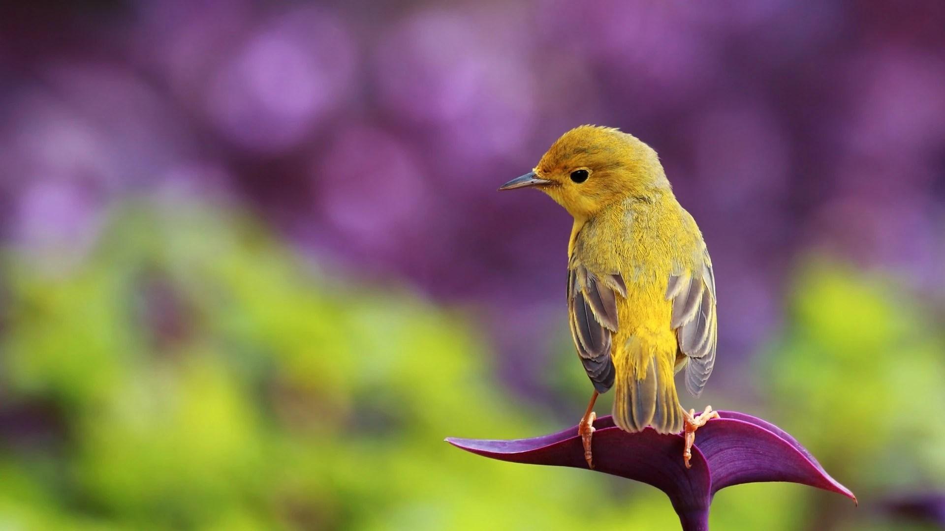 Nature bird Wallpaper