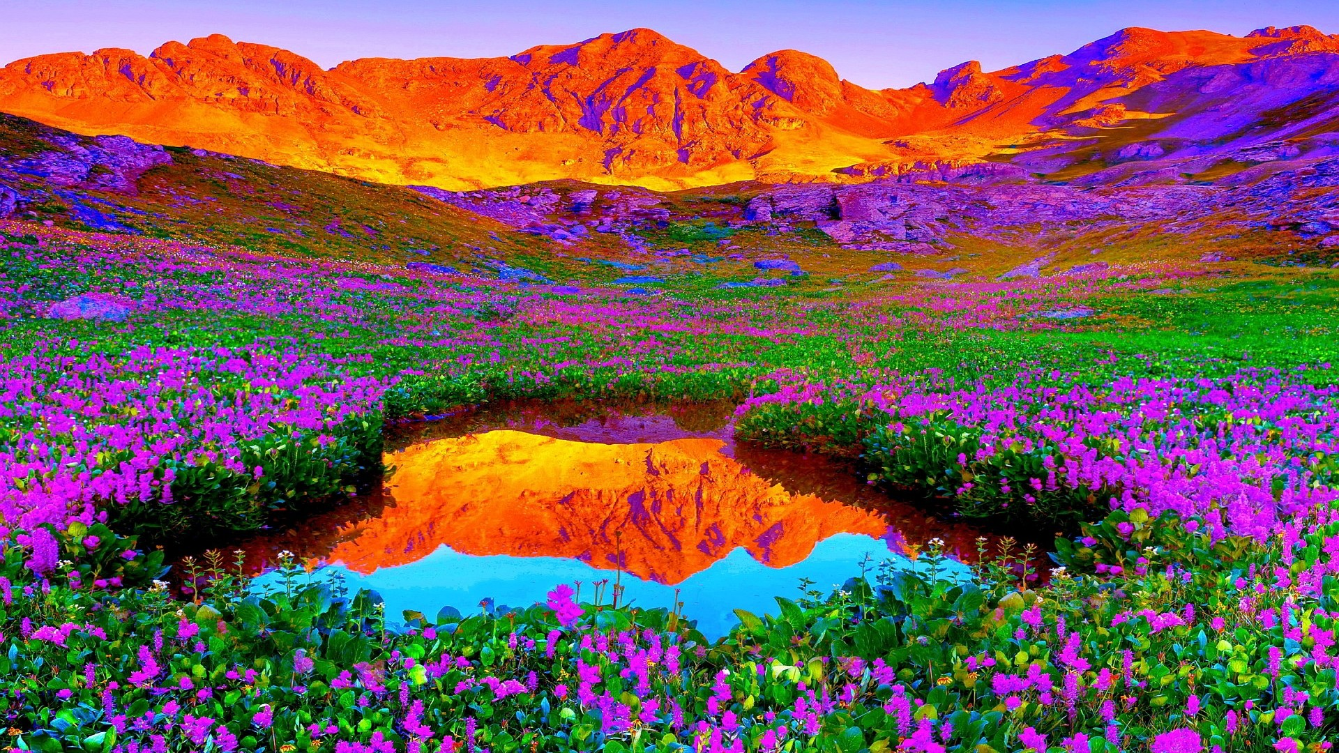 Red-Mountain-Purple-flower-wallpaper