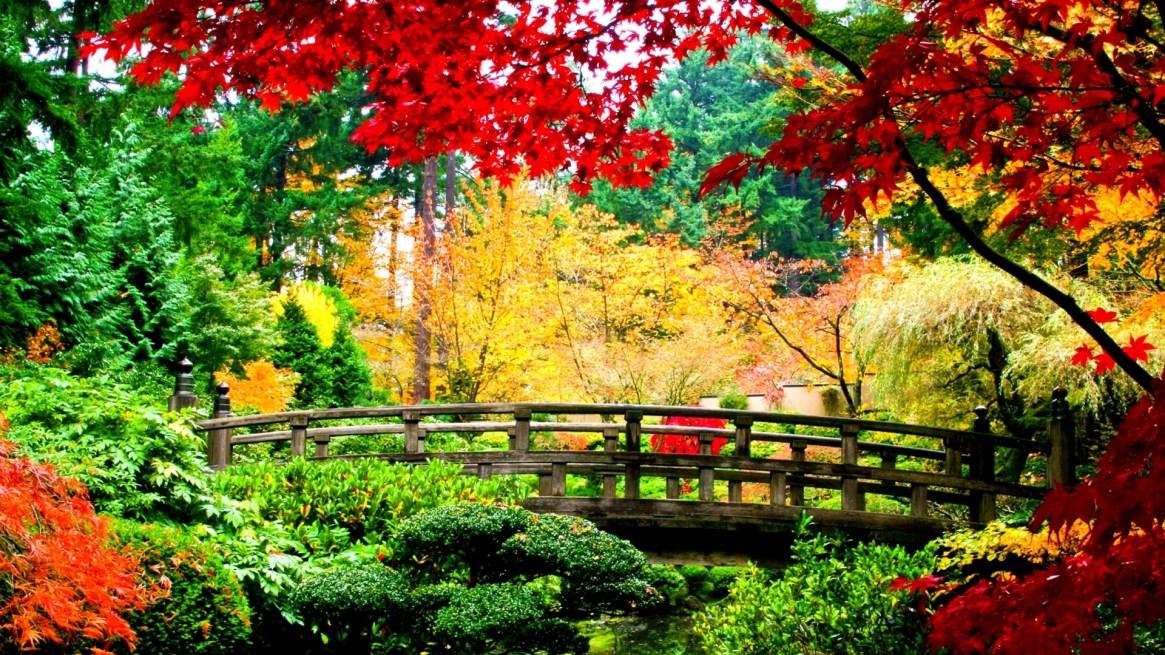 fall-wallpapers-jungle