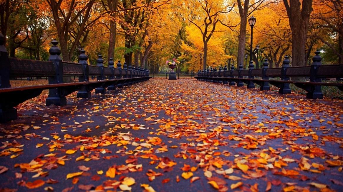 falling-leaves-wallpaper