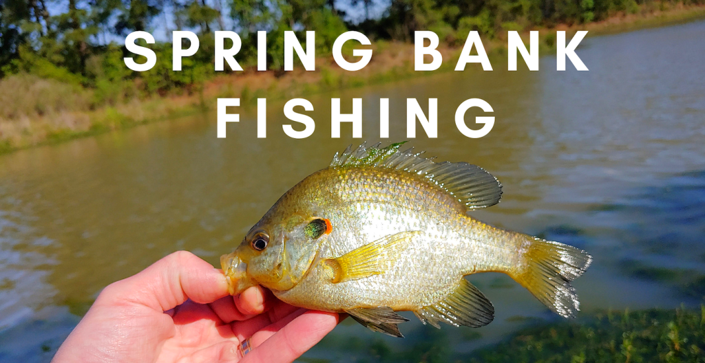 SPRING BANK FISHING