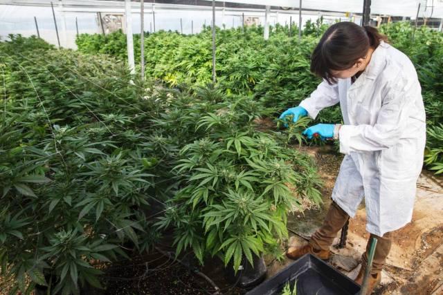 weed growing business