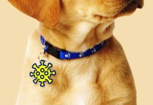 Pet ID Tags Where To Purchase Them