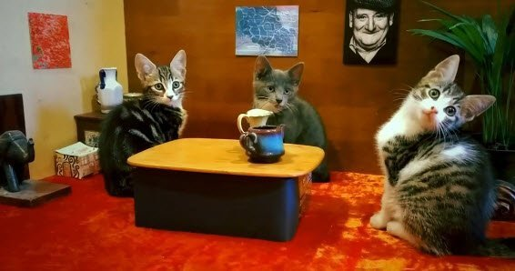 Lumia 930 cats commercial