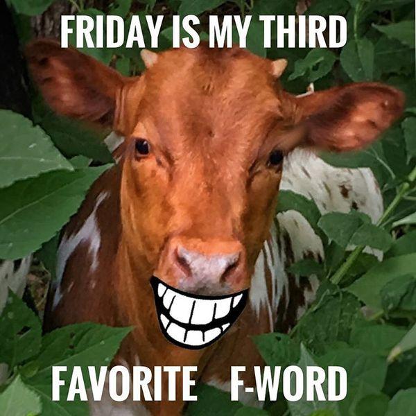 Пятница - мое третье любимое f-слово