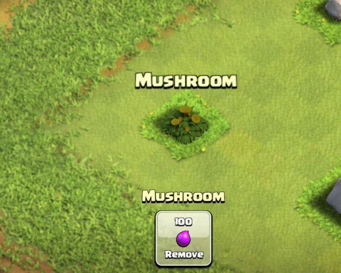 Coc-mushroom2