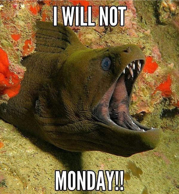 я не буду в понедельник