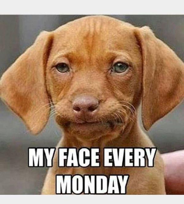 myf face каждый понедельник
