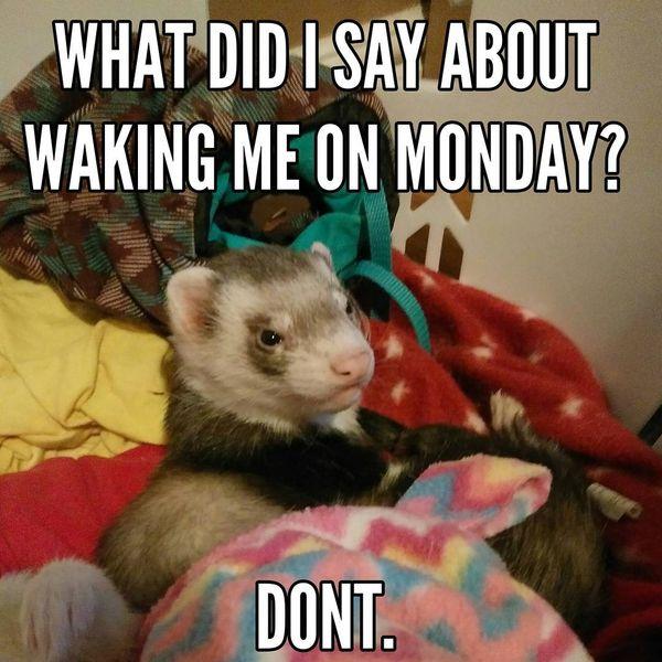 что я сказал, что разбудил меня в понедельник