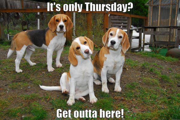thursday funny pics