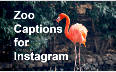 83 Instagram Captions For The Zoo