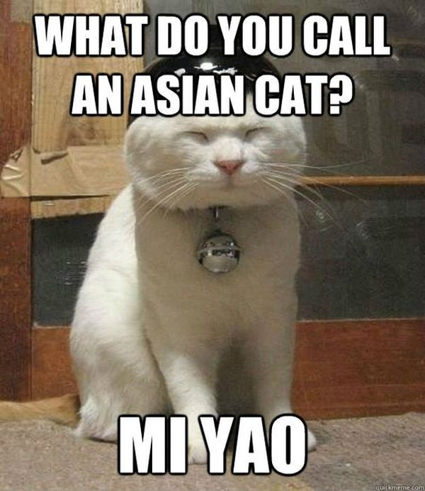 Fabulous Funny Asian Cat