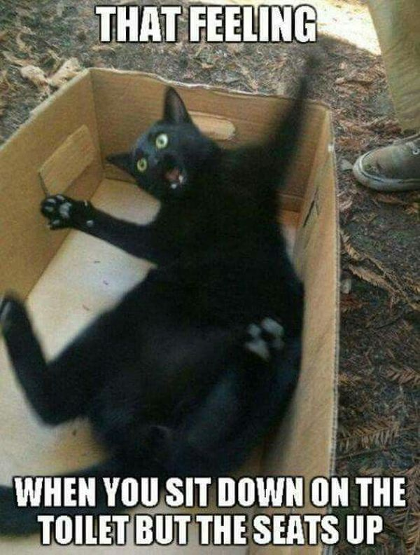 Unbelievable Funny Black Cat Memes