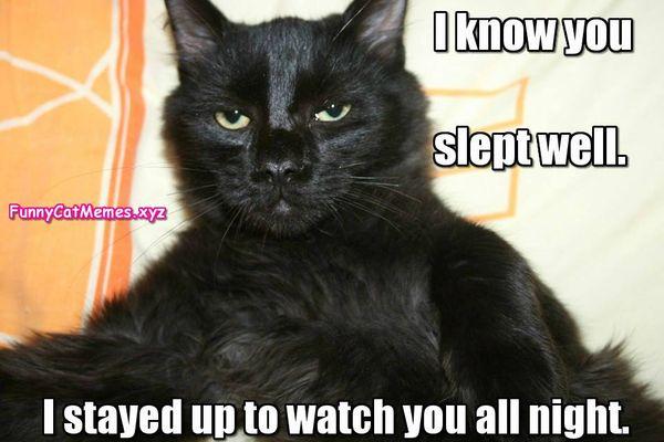 The best memes about black cat