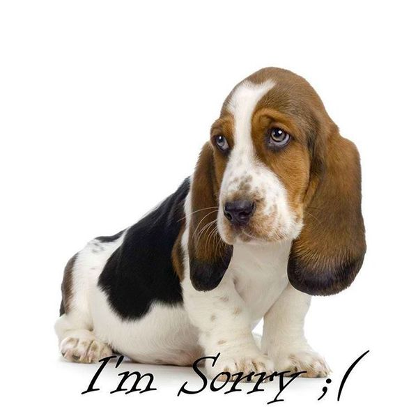 Sorry Messages from Dog