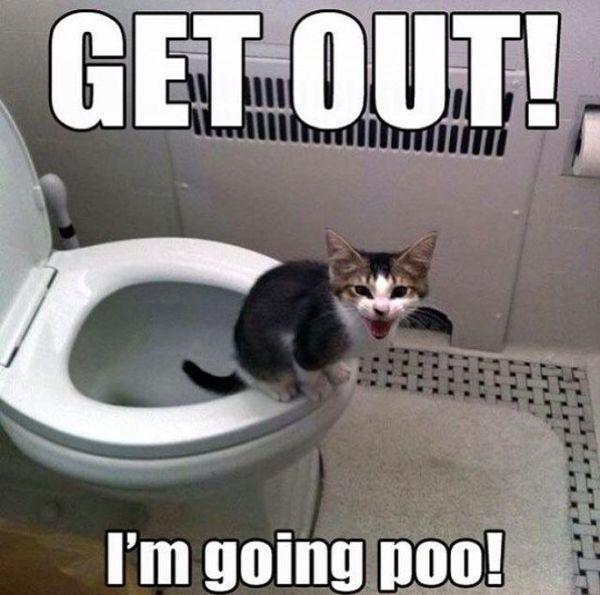 Funny kitten meme