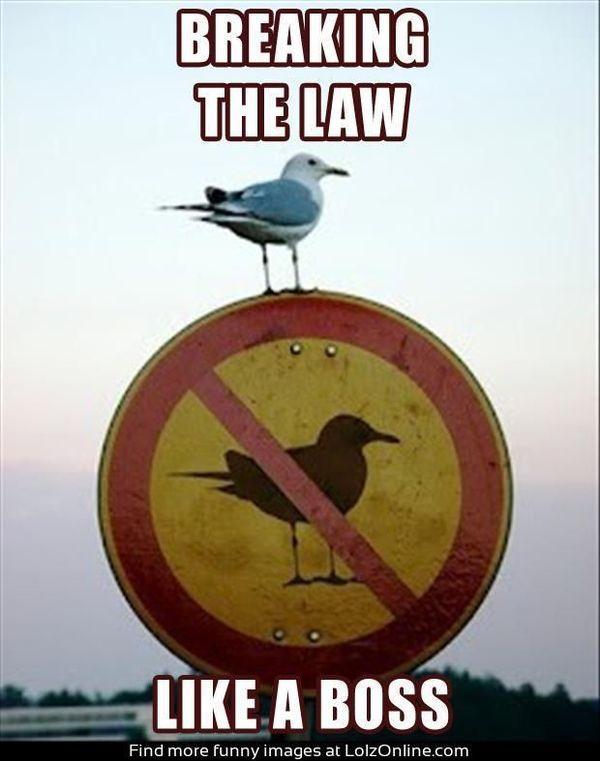 Breaking the law like a boss