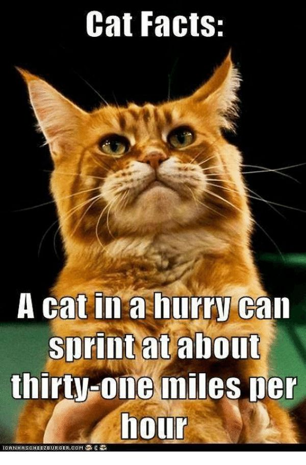 Meme Incredible Facts About Cats