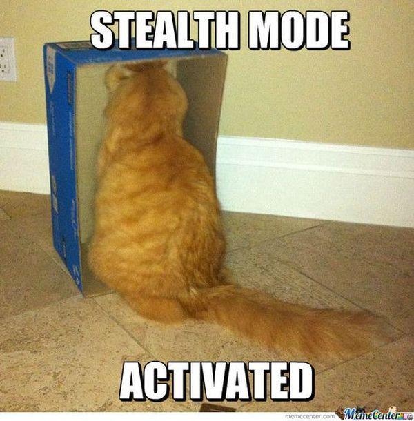 Stupid Cat Meme