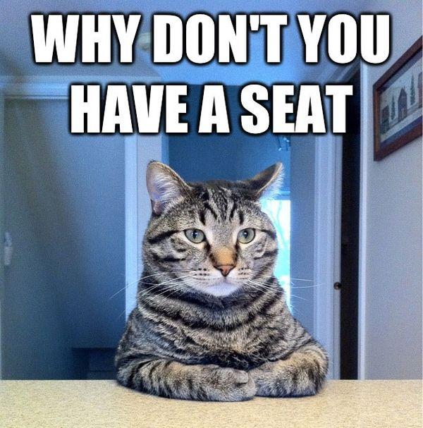 Interesting cat sitting at the table meme