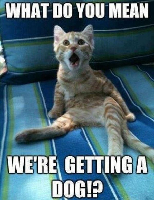 Popular cats say funny things