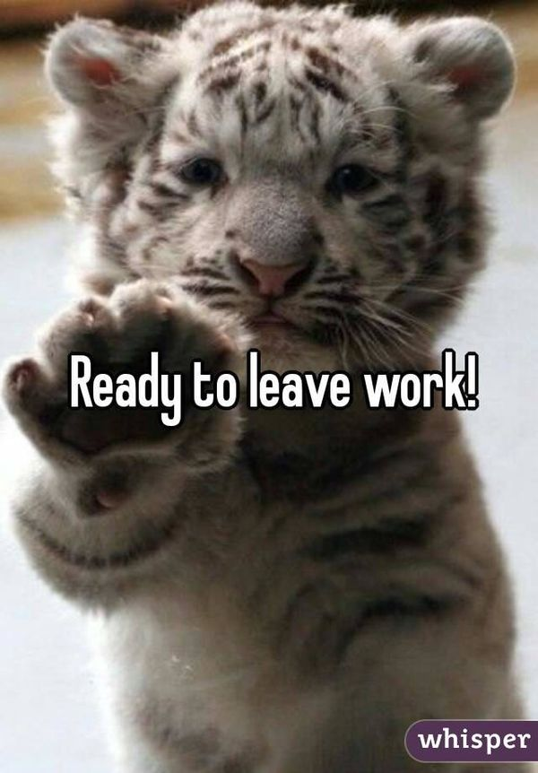 Cute Ready to Leave Work Meme