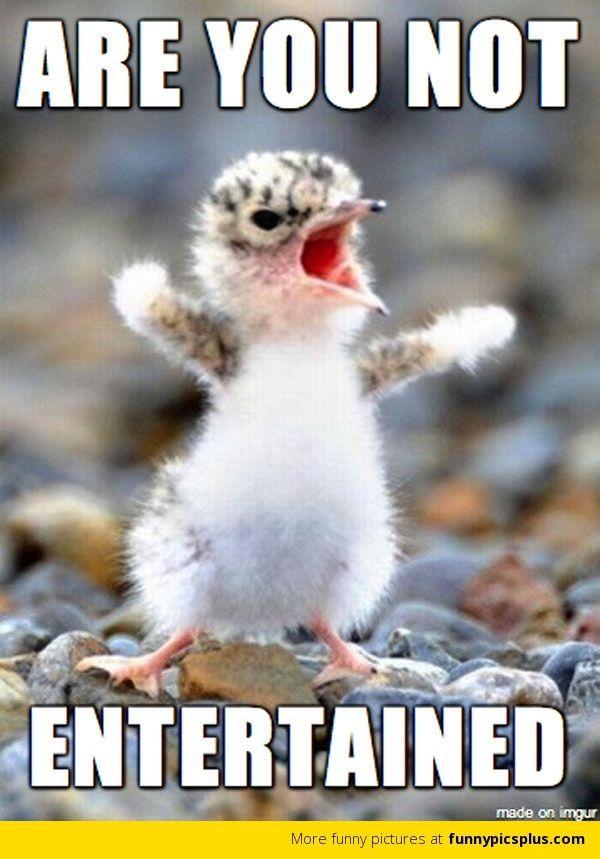 Smooth angry animal meme