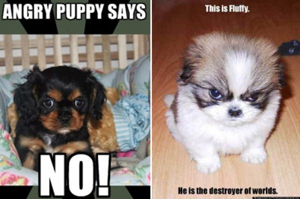 Wonderful angry animal meme