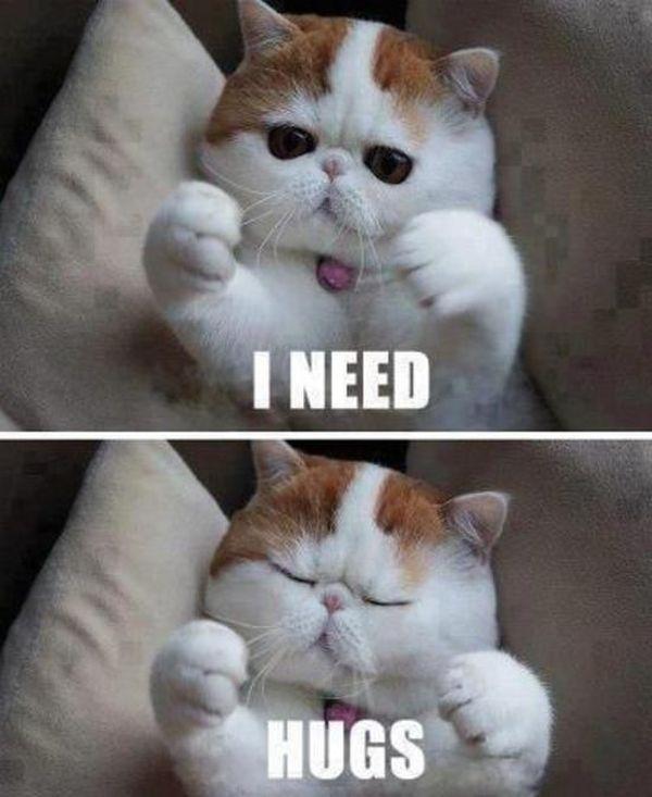 Beautiful cute hug meme