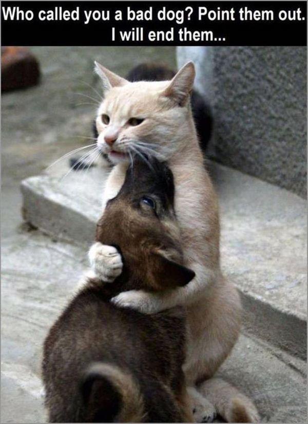 Good funny hug pics