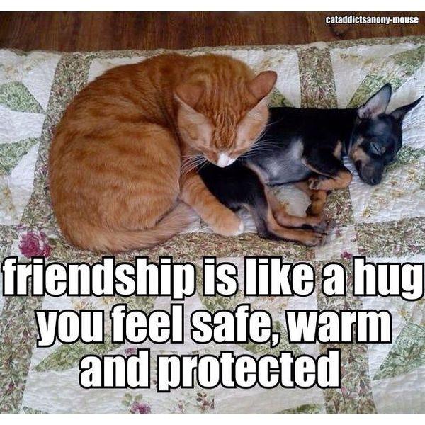 Cute funny photo hugs