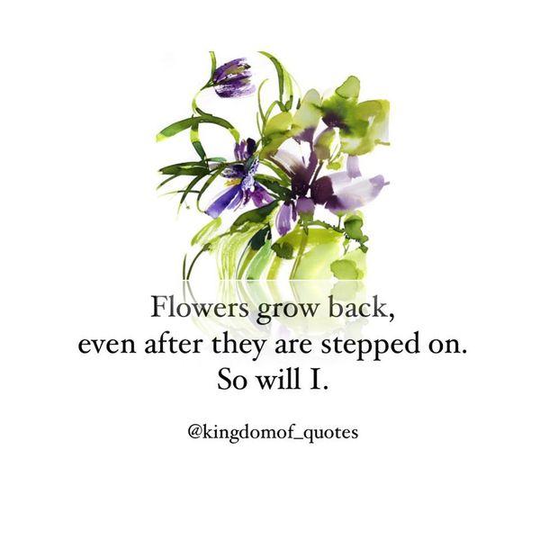 Цветы снова отрастают, даже если на них наступили.
