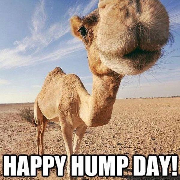 Cool Happy Hump Day Meme 5