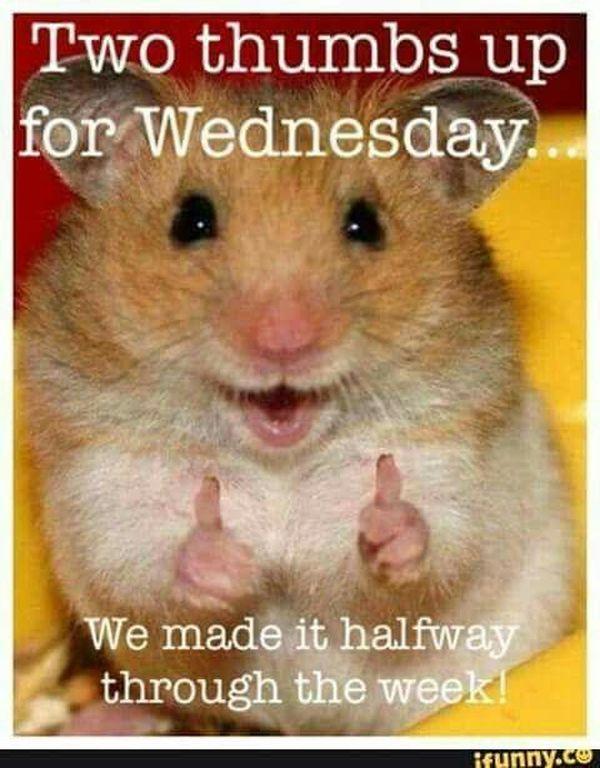 Cute Its Hump Day Meme 4