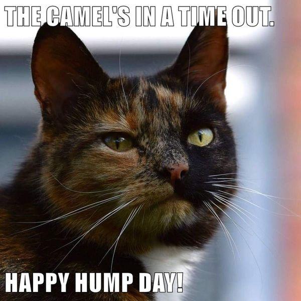 Cute Its Hump Day Meme 6