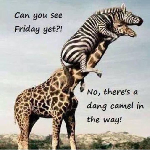 Hilarious Images with Hump Day Humor 1