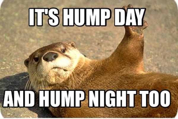 Hilarious Images with Hump Day Humor 5