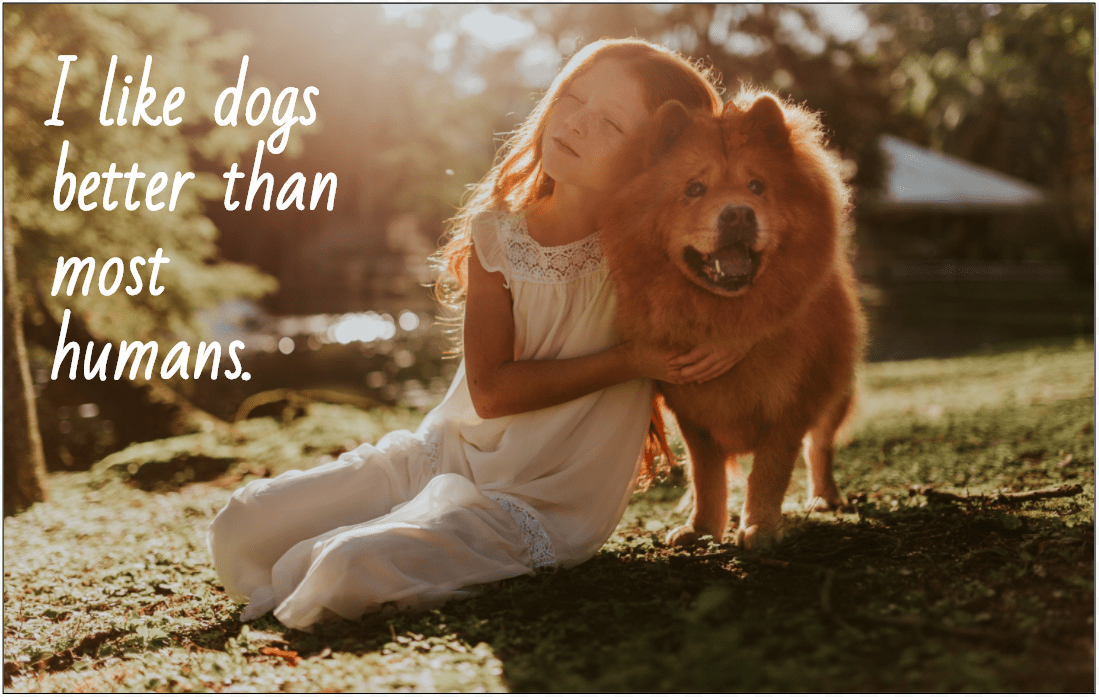 captions to capture your dog s personality perfectly for instagram