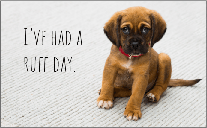 104 Captions to Capture your Dog's Personality Perfectly for