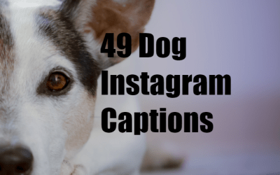 49 Captions To Capture Your Dogs Personality Perfectly For Instagram