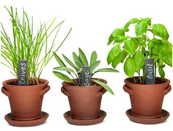Window Garden Rustic Charm Herb Trio