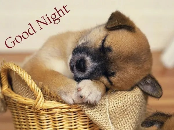 Симпатичные фото для спокойной ночи 1
