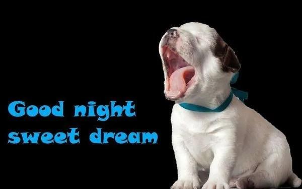 Смешные картинки для пожелания спокойной ночи 1