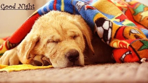 Sleepy Good Night Images for You 5