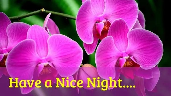 Useful Good Night Images with Nice Flowers 6
