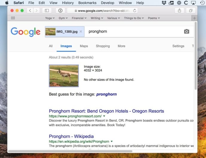 Pronghorn Picture Identified